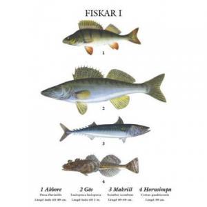 Mindre skolplansch Fiskar - Nostalgiska.se