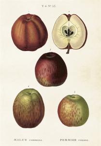 Skolplansch Äpplen - Nostalgiska.se