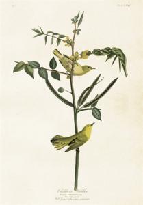 Skolplansch Fåglar - Nostalgiska.se