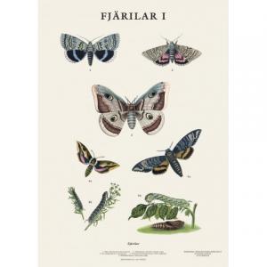 Mindre skolplansch Fjärilar - Nostalgiska.se