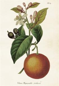 Skolplansch Apelsin - Nostalgiska.se