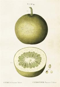 Skolplansch Citrus - Nostalgiska.se