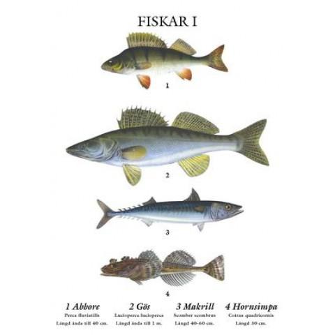 Grunne Mindre skolplansch Fiskar - Nostalgiska.se
