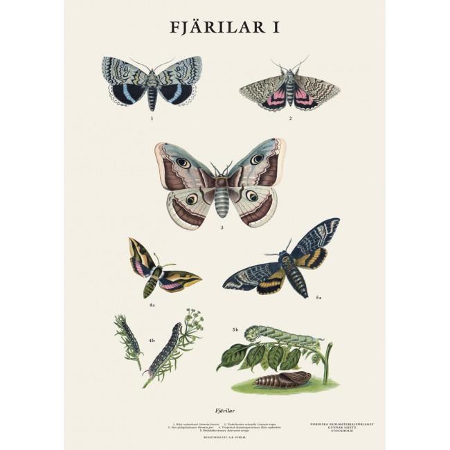Skolplansch Fjärilar - Nostalgiska.se